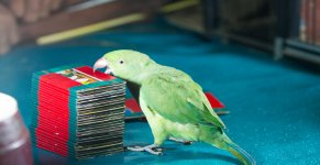 Parrot Astrology Live Stall